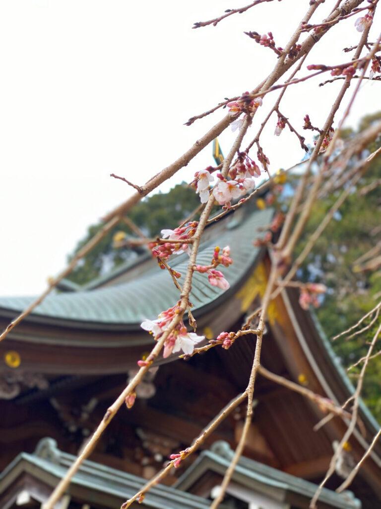 春日神社 写真2